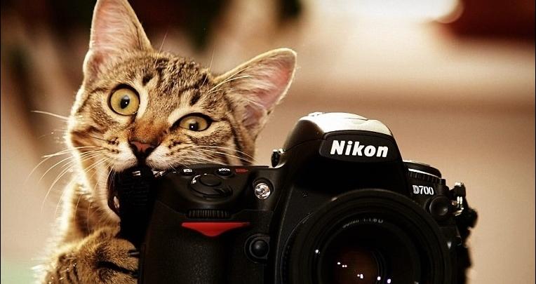 أفضل مواقع بيع الصور الفوتوغرافية و الربح منها 2020 1